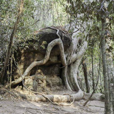 Cambodge forêt primaire 11 février 2011
