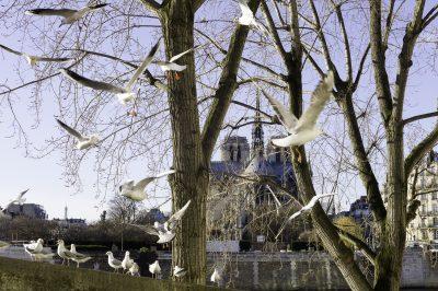 Paris - quai d'Orléans - 14 janvier 2015