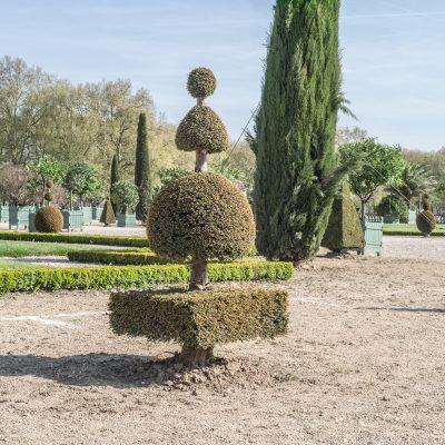 Versailles l'orangerie au printemps 20 avril 2017